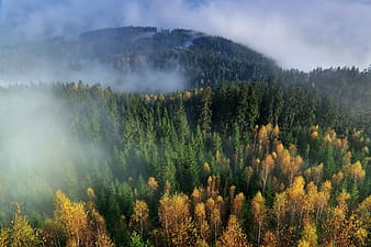 Forest covered with fog at daytime