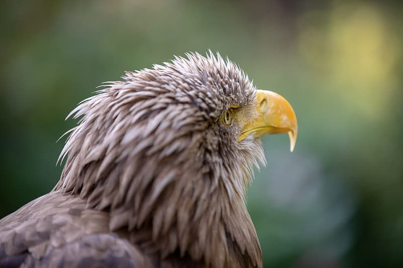 Brown and white eagle in close up photography during daytime
