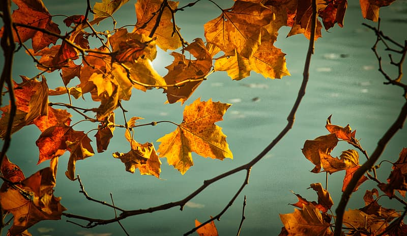 Brown leaves on body of water during daytime