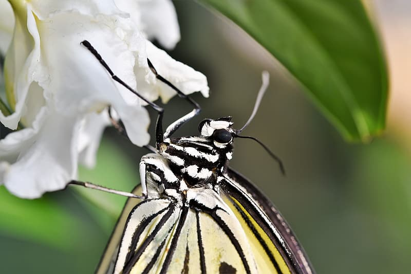 Yellow and black butterfly perched on white flower