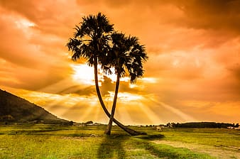 Silhouette photography of two coconut palm trees during golden hour
