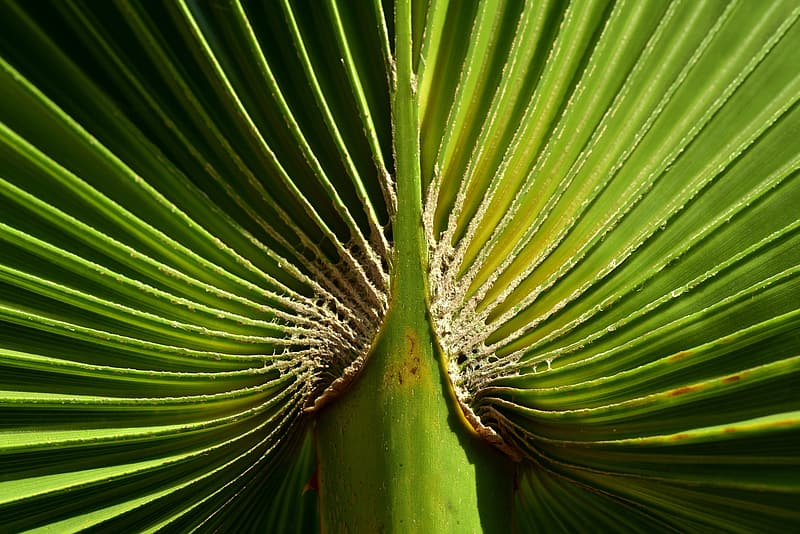 Green and brown plant in close up photography