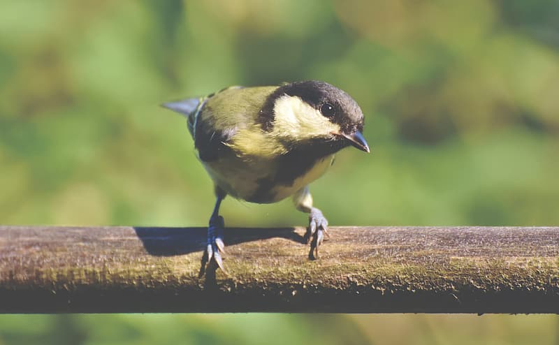 Yellow and black bird on brown wooden branch