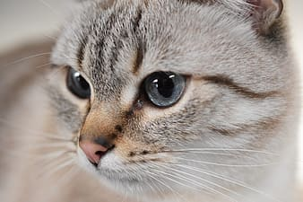Brown tabby cat in close up photography