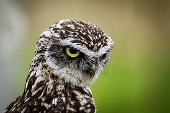 Brown and white owl in close up photography during daytime