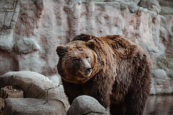 Brown bear on gray rock during daytime
