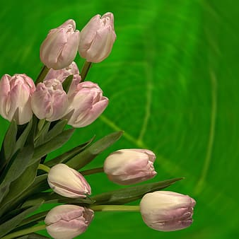 Pink and white petal flowers