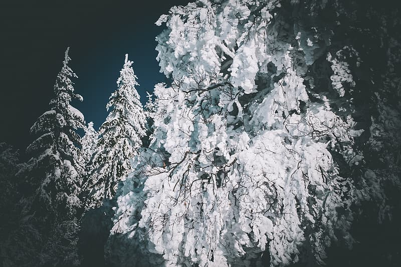 White and black tree covered with snow