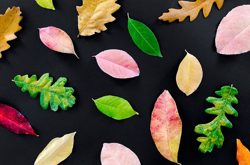 Green and yellow leaves on black surface