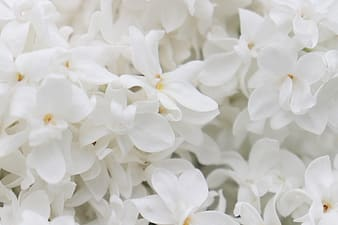 White flowers in macro shot