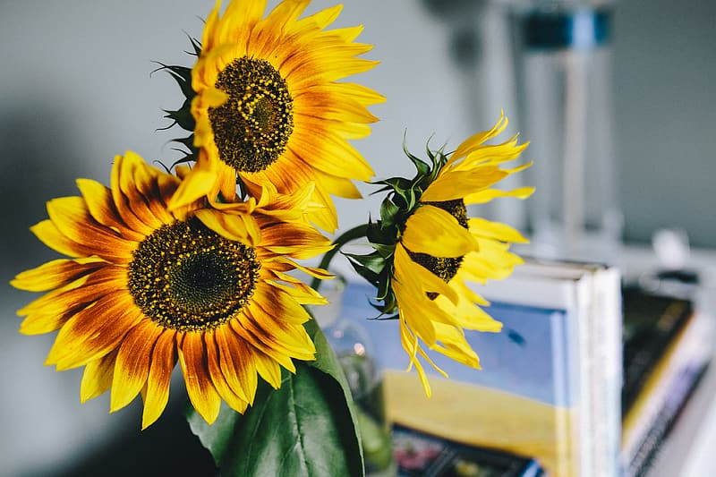 Sunflowers and books
