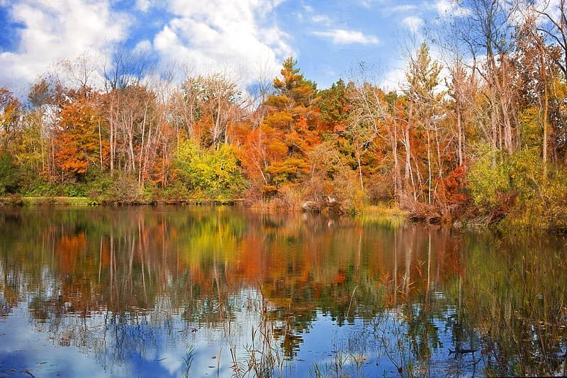 Body of water near brown trees