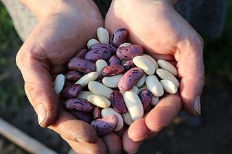 White and pink seeds on person's hand