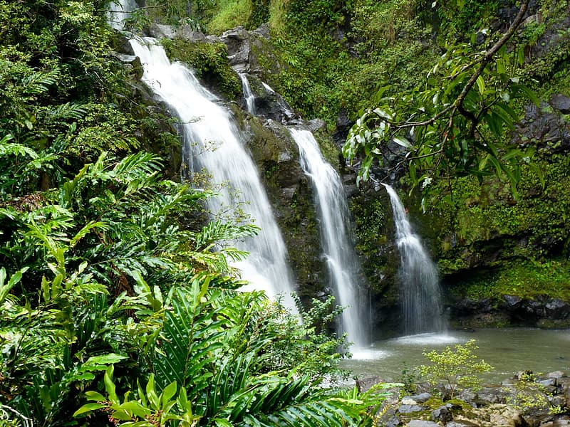 Waterfalls surrounded by trees and grasses