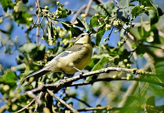 Yellow and black bird on tree branch during daytime