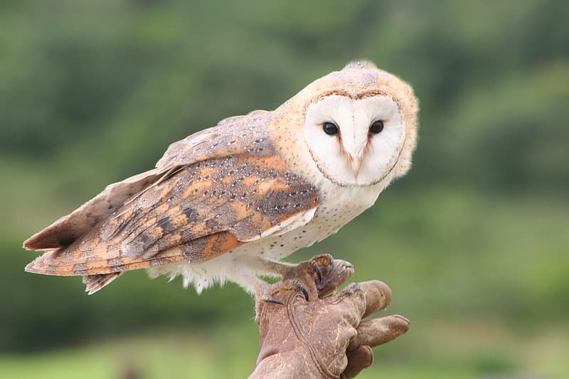 White and brown owl on brown tree branch