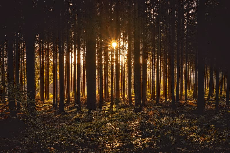 Landscape photography of crepuscular rays in forest