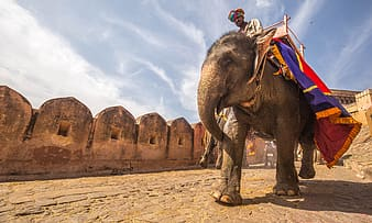 Man riding on elephant during daytime