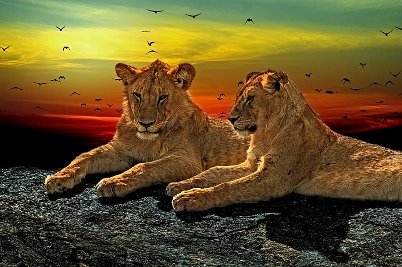 Two brown tigers