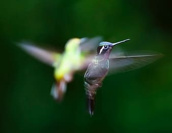Shallow focus photography of two birds