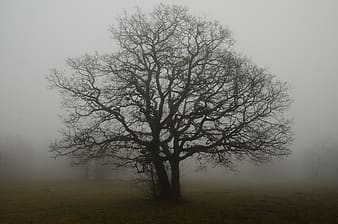Leafless tree covered with smoke