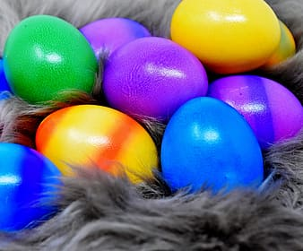 Assorted eggs on fur textile