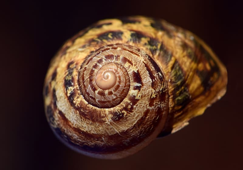 Selective focus photography of brown snail \