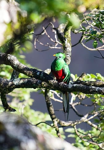 Green and red bird perched on tree branch