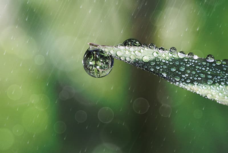 Macro photography of droplet on green leafed plant