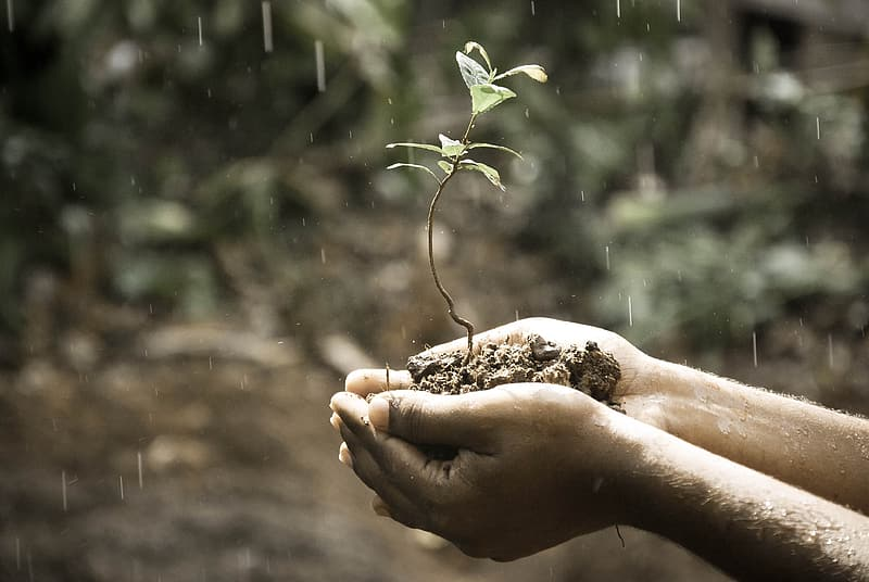Person holding soil with plant