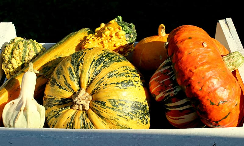Yellow and orange pumpkins on white table