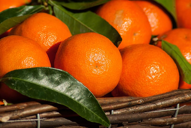 Round orange fruits