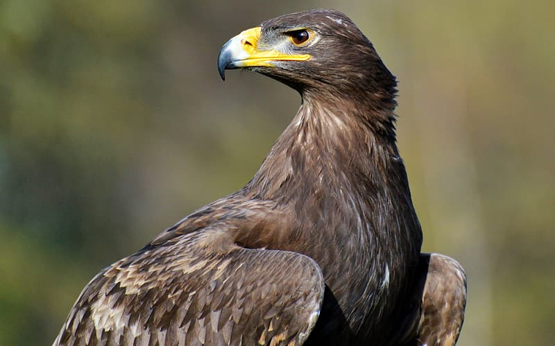 Brown eagle in close up photography