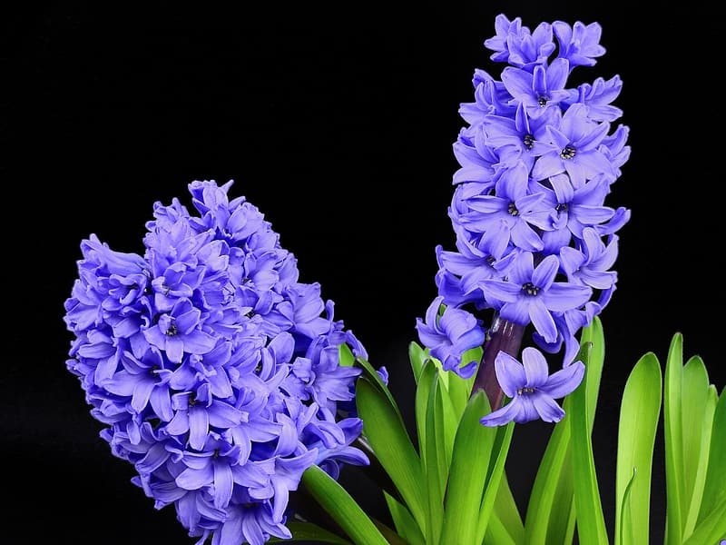 Selective photo of purple petaled flowers
