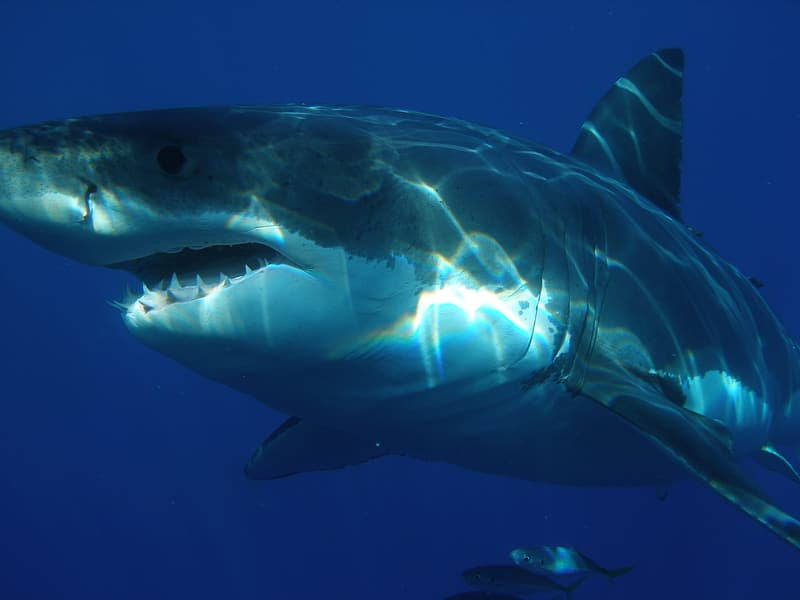 View of shark under the sea