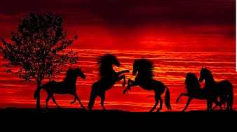 Silhouette of people riding horses during sunset