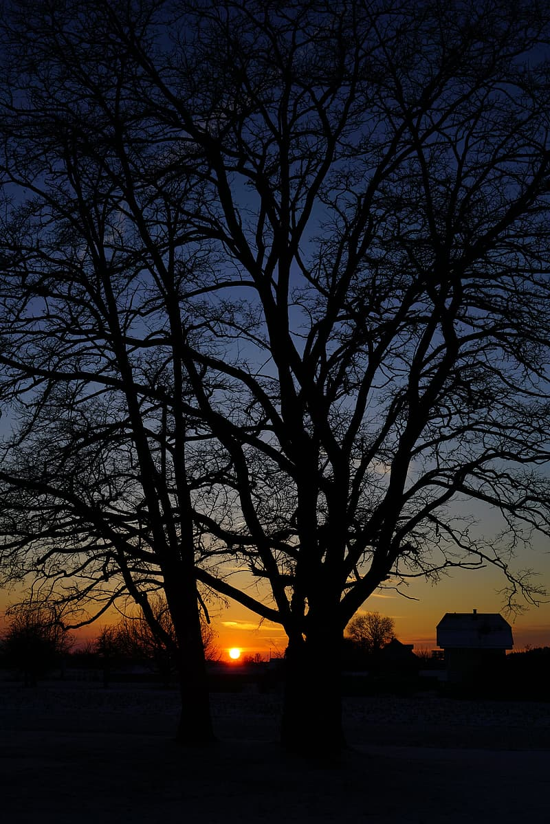 Bare trees during night time