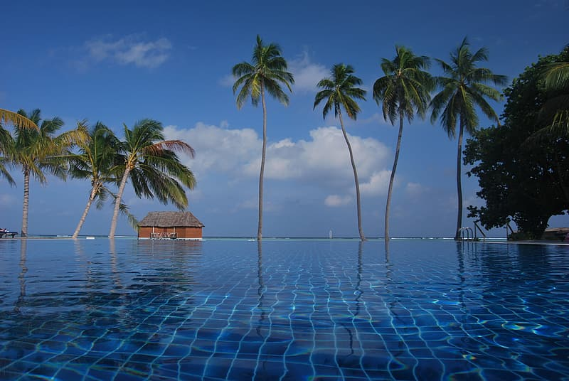 View of infinity pool and palm trees during daytime