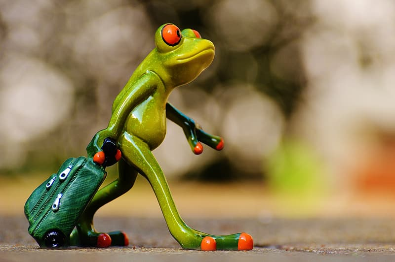 Red eyed frog holding green bag wallpaper