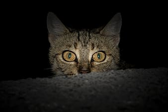 Close photography of grey tabby cat
