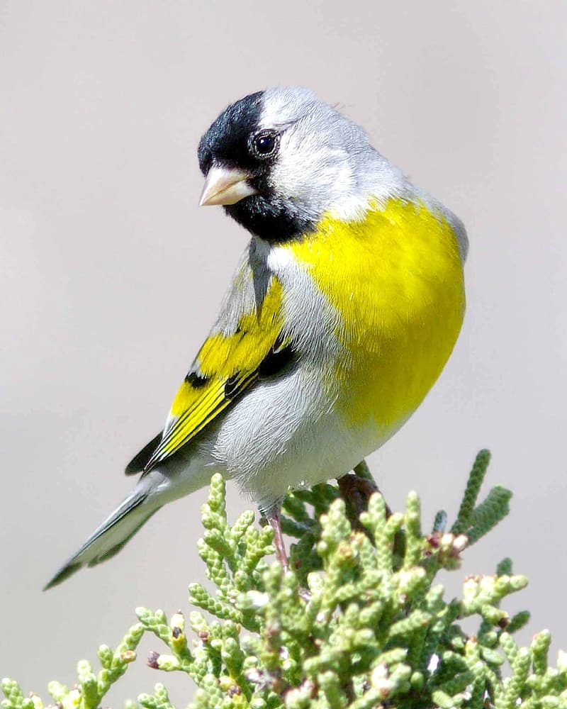 Close up photography of white, yellow, and black bird