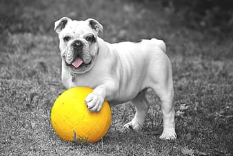 Selective color photography of ball played by dog