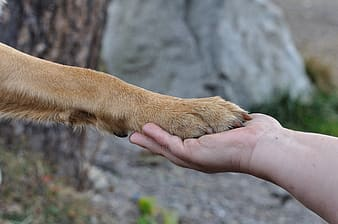 Person holding a animal hand