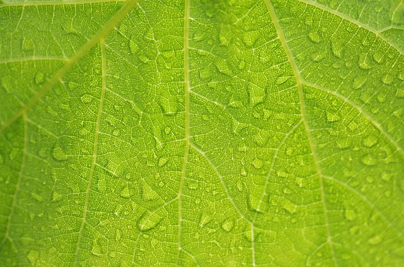 Macro photography of leaf with droplet