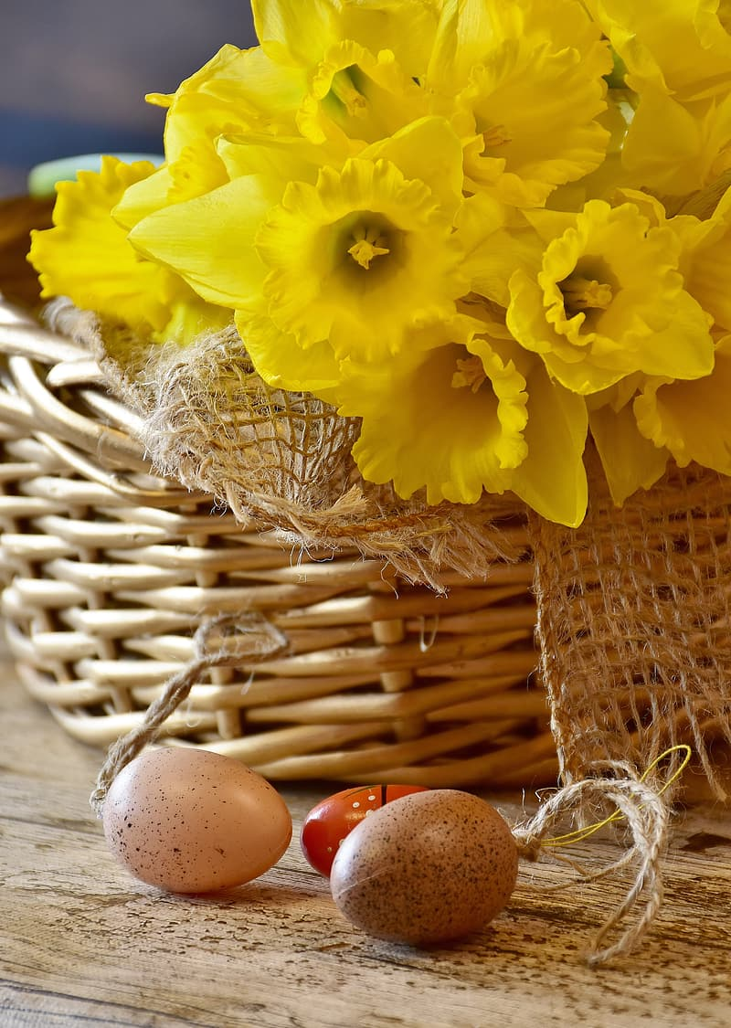 Yellow daffodil flowers and two egg decors