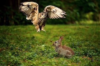 Brown rabbit on green grass