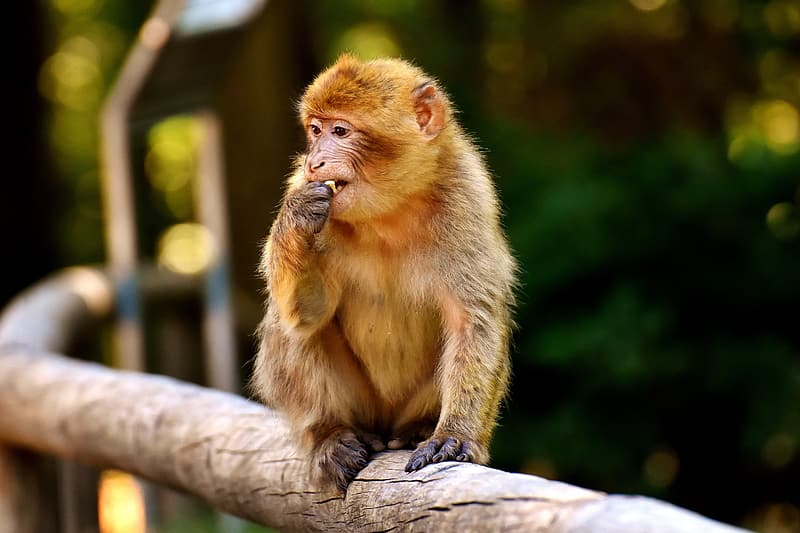 Primate sitting on tree branch