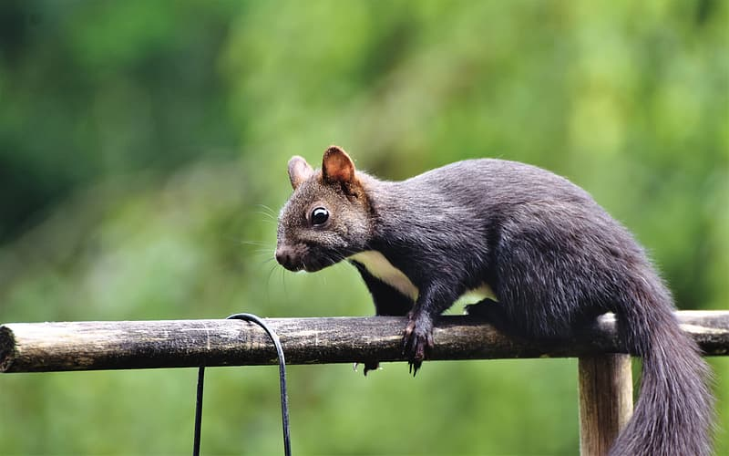 Gray squirrel on brown wooden stick during daytime
