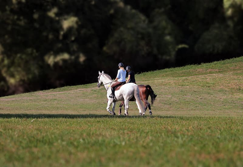 2 men riding horses on green grass field during daytime