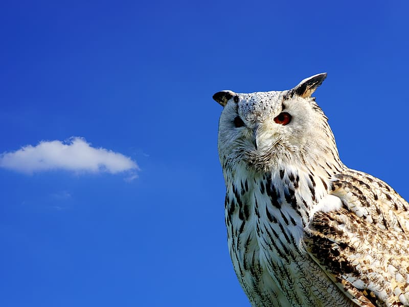 White and brown owl under blue sky during daytime